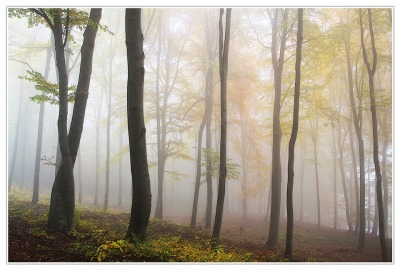 Autumn by Alois Wonaschuetz