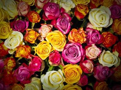 Roses, by Michael Gaida [Public Domain]