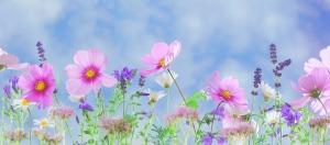 Wild flowers by Soorelis