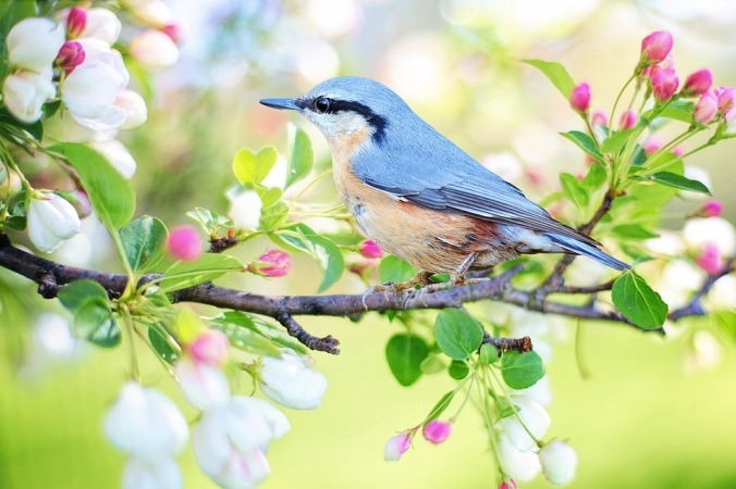 Spring bird. Photo by Jill 111. [Public Domain, CC0]