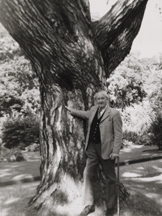 Tolkien with the pine tree in Oxford Botanical Gardens