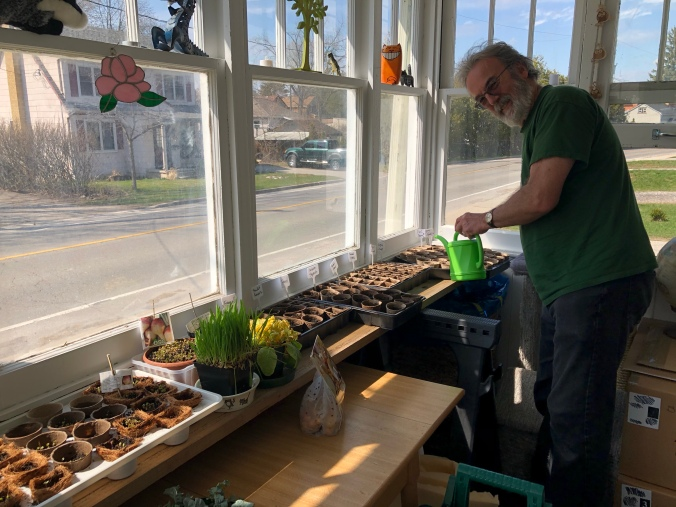 Bob watering the trays of seedlings in the front porch