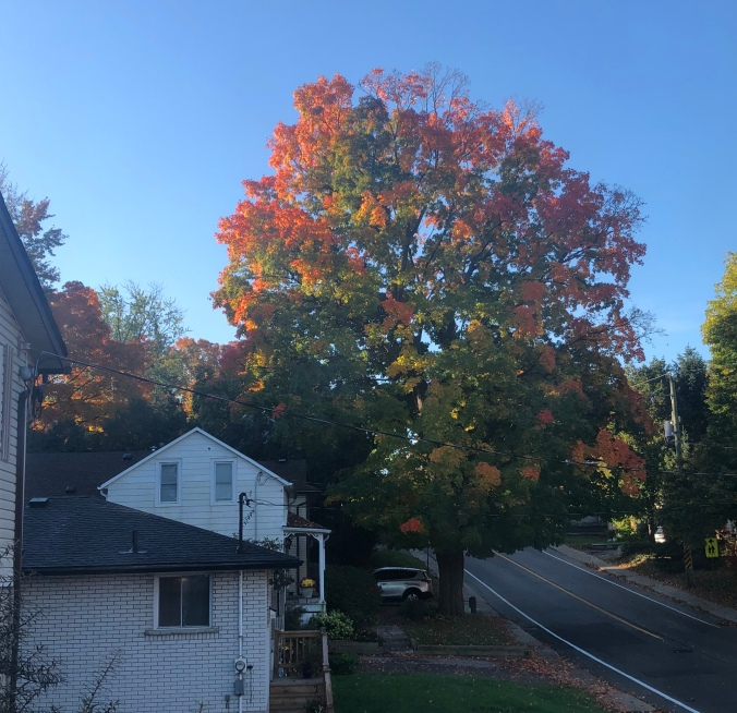 The tree at 10 October, 2018 at 8:56 am