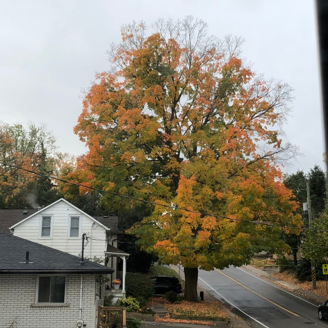 The tree on 17 October 2018 at 9:36am
