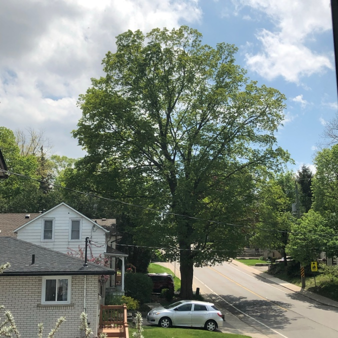 The tree on 24 May 2020