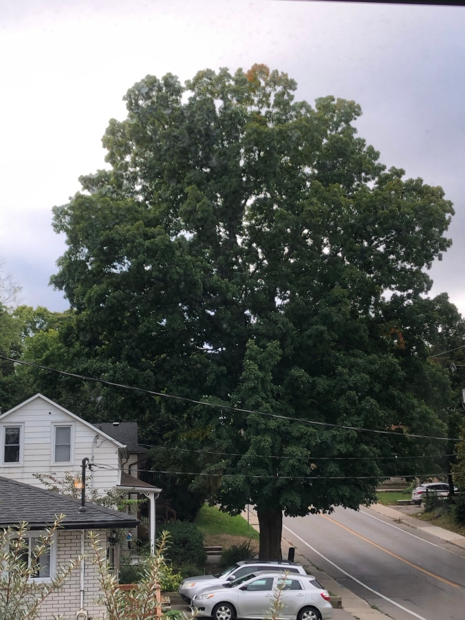The tree on 11 September 2020